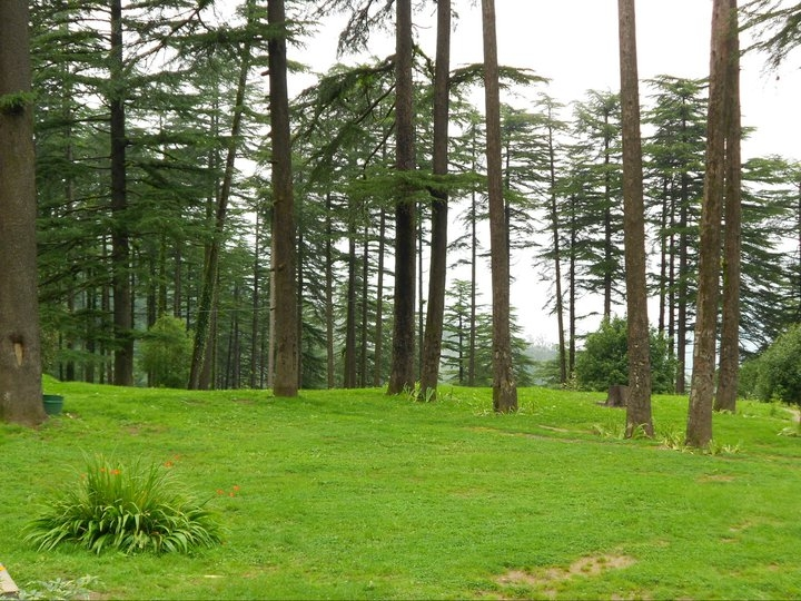 Dhanaulti Tourist Guide