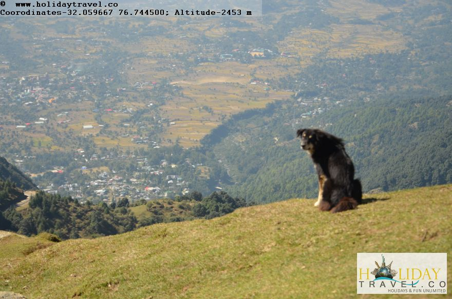 Billing-World-Top-Paragliding-Site-Lone-Dog-Enjoying-at-Billing