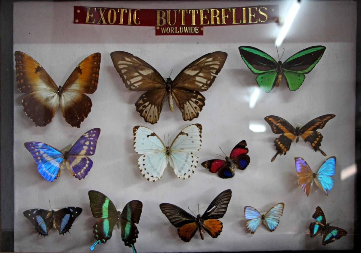 Butterfly Museum in Shillong