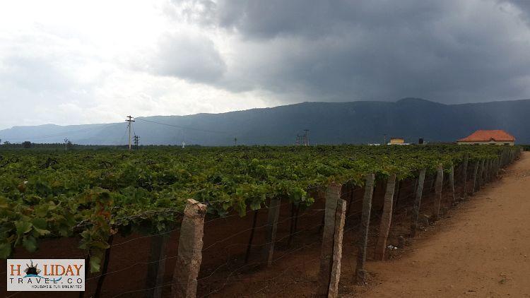 GrapesPlantation-Lowercamp-Thekkady