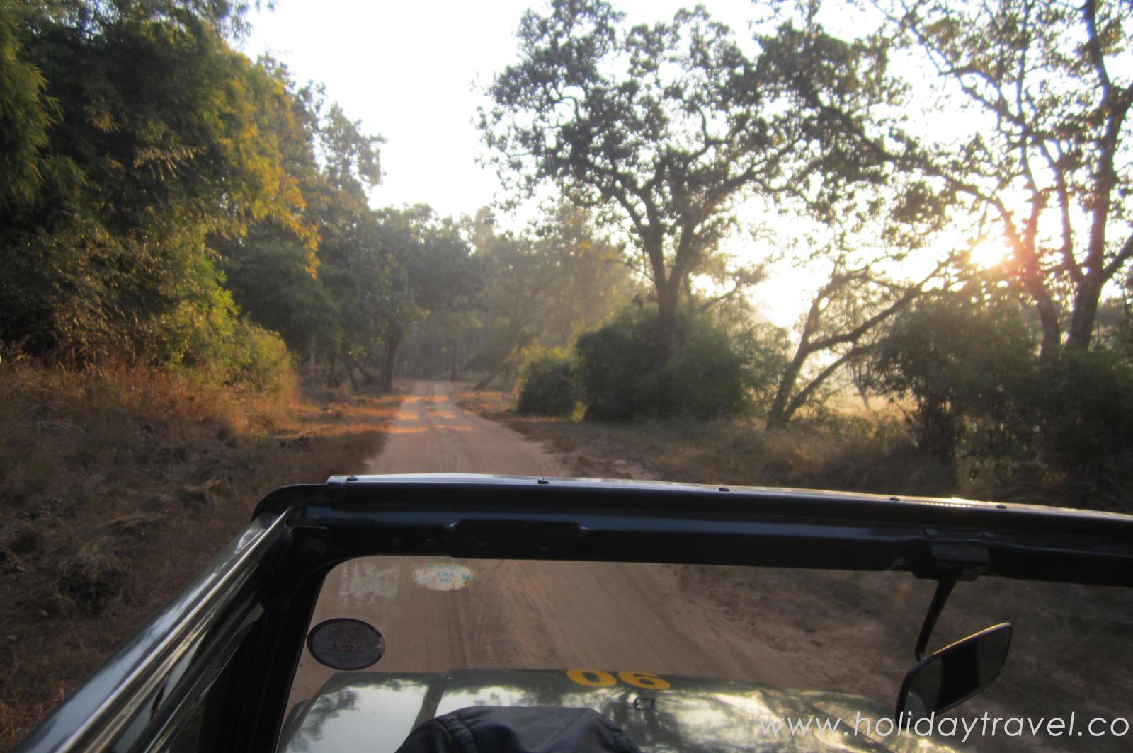 jungle safari in magadhi zone