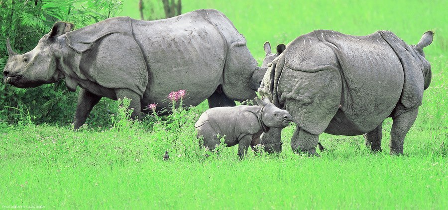 Kaziranga national park1234
