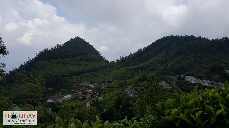 Kolukkumalai-Tea-Estate-Panorrmic-View