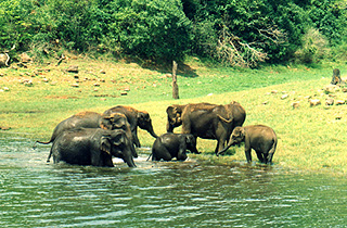 Periyar Wildlife Sanctuary.jpg