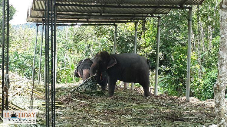 Periyar-Elephant-Centre