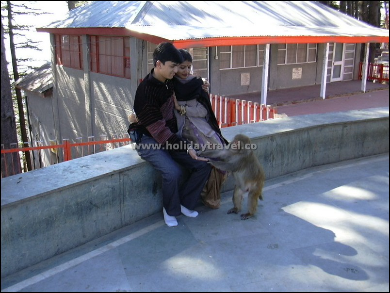 Shimla_HoneymoonCouple