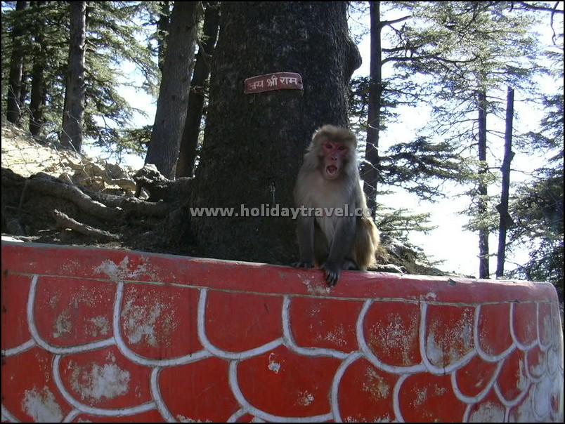 Shimla_JaiShriRamWithAngry-Hanuman