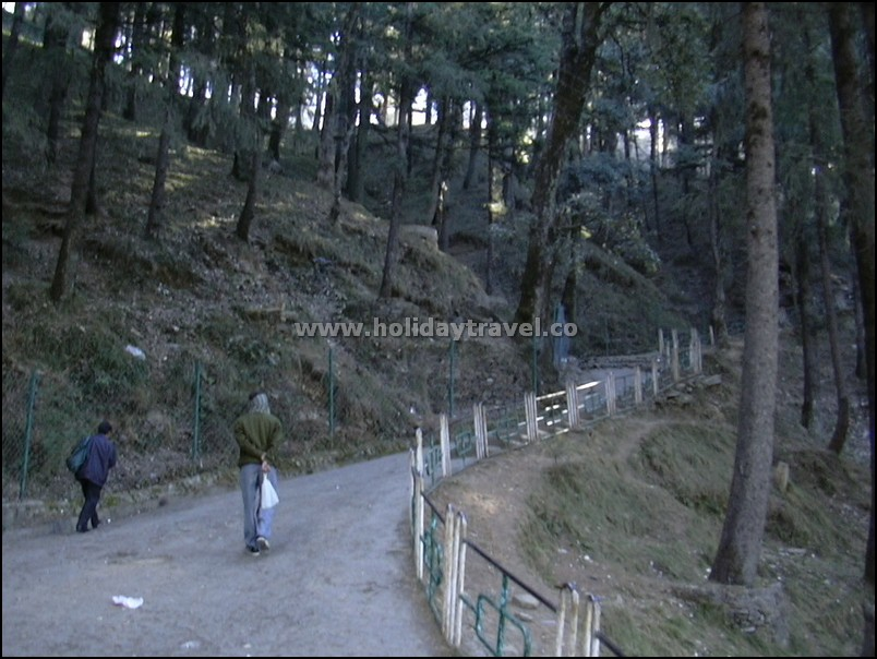 Shimla_WalkwaytoJakhoo