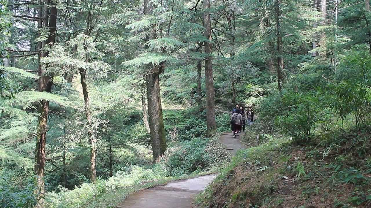 Trekking in Chail