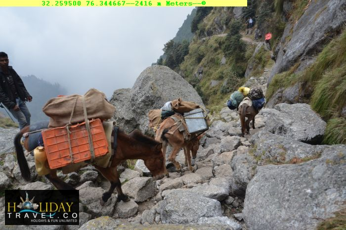 Triund-Trek-Package-Camping-Tour-Camp-Horses-carrying-Tent-Camp-materials