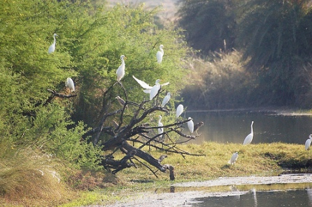 Van-Vihar-National-Park-Bhopal