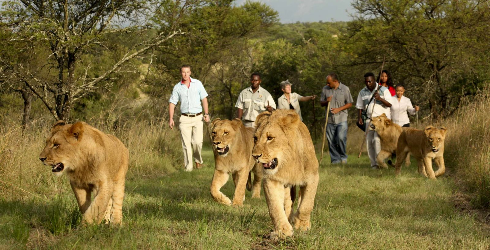 Walk with the Lions.JPG