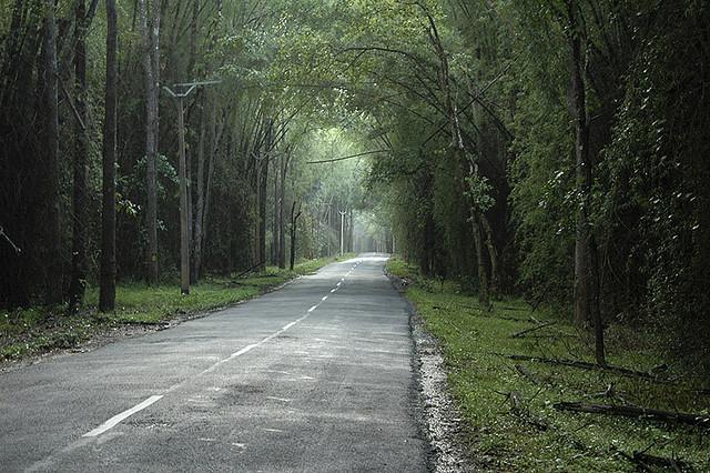 Wayanad_Highway.jpg