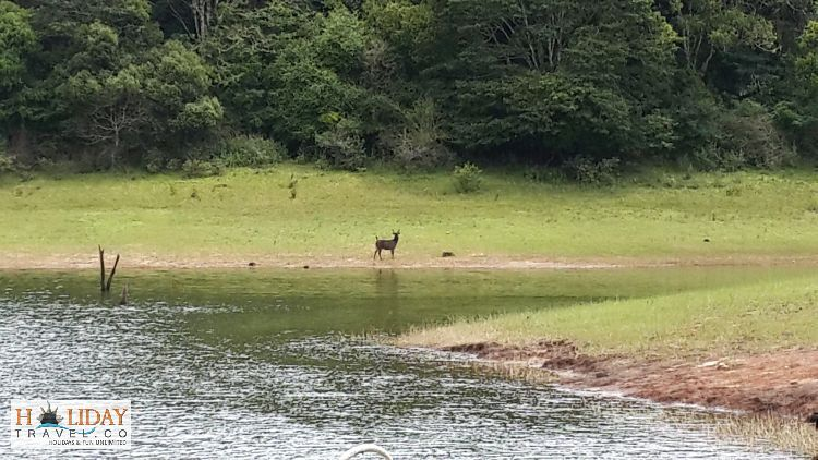 Wild-Deer-Visible-From-Boat-PeriyarLake