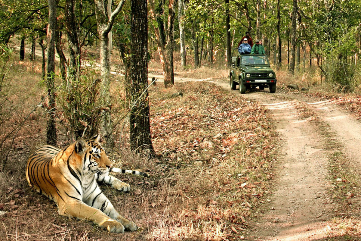 bandhavgarh tiger safari