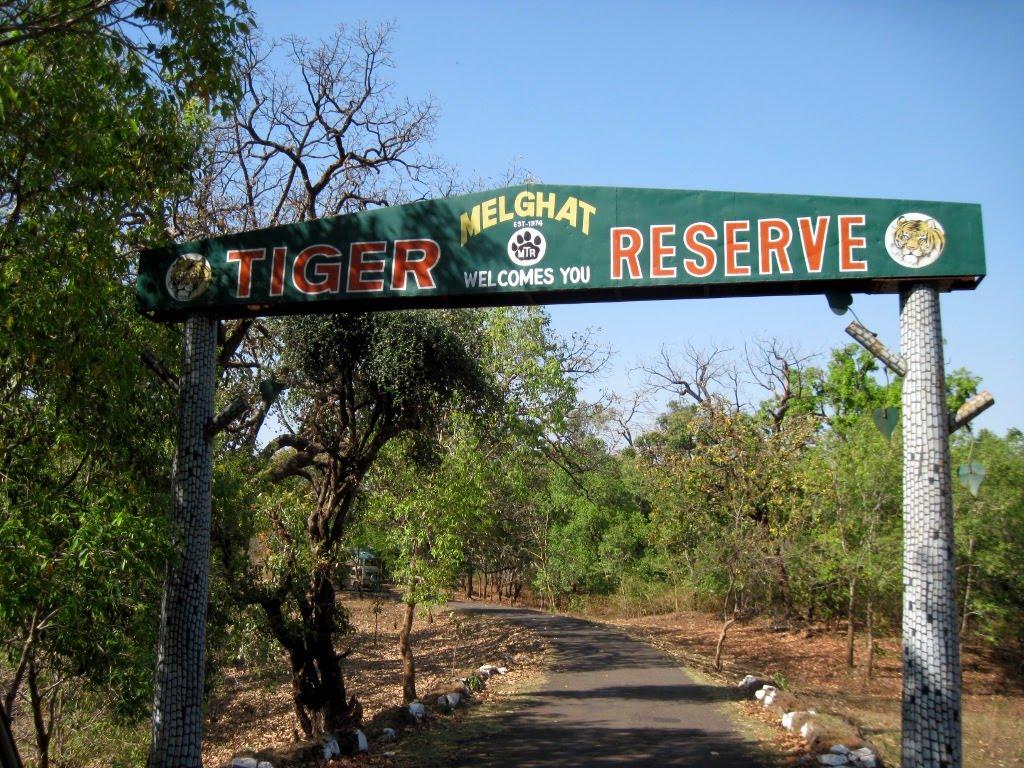 chikhaldara tiger reserve