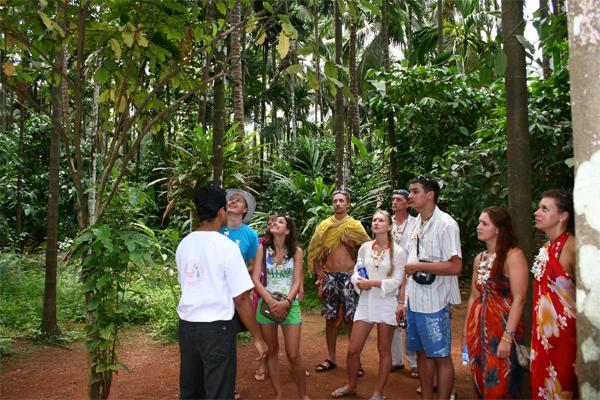 sahakari spice  plantation