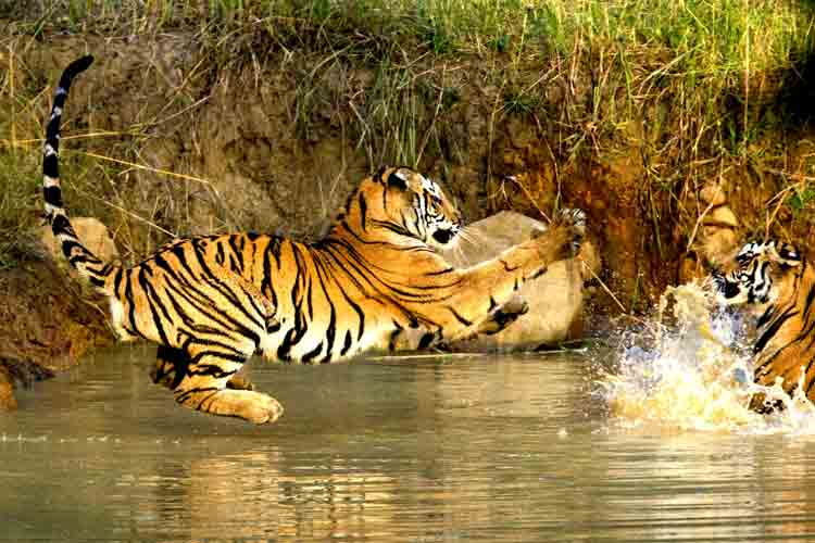 Bandhavgarh Budget Package Holiday Travel