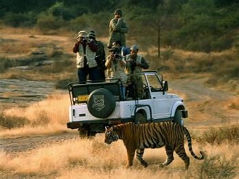 tiger-safari-1