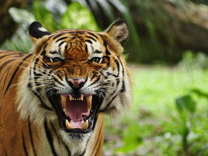 Ratapani Wildlife Sanctuary – Raisen, Madhya Pradesh